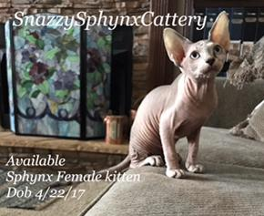 Snazzy Sphynx Cattery